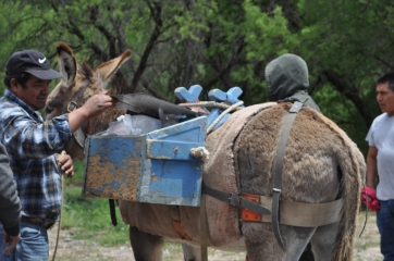 Loading the donkeys with supplies for the herders